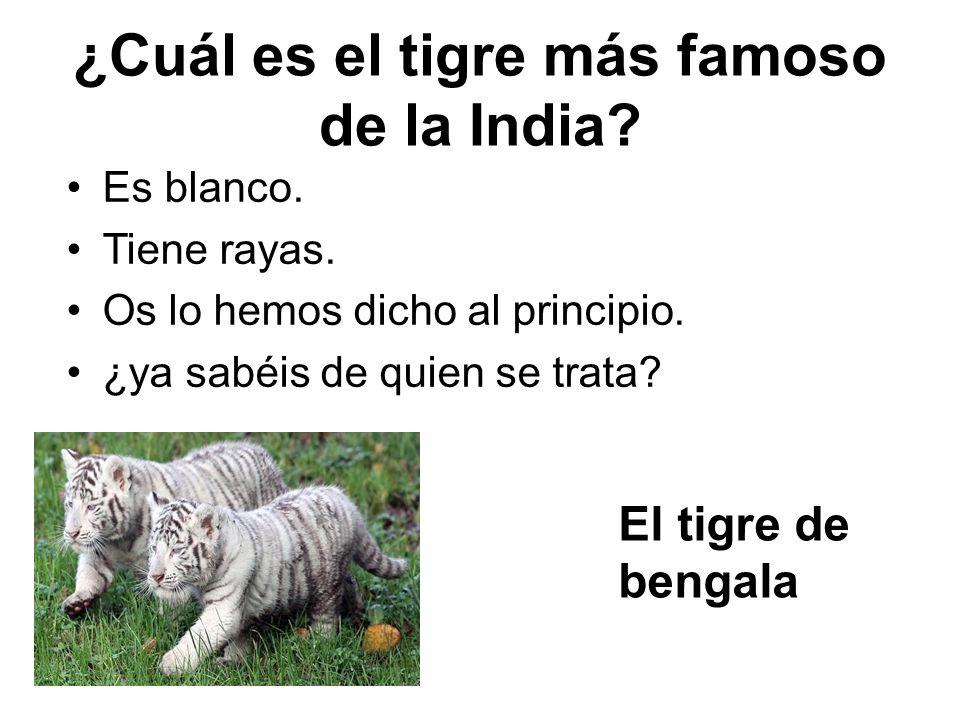 ¿Cuál es el tigre más famoso de la India