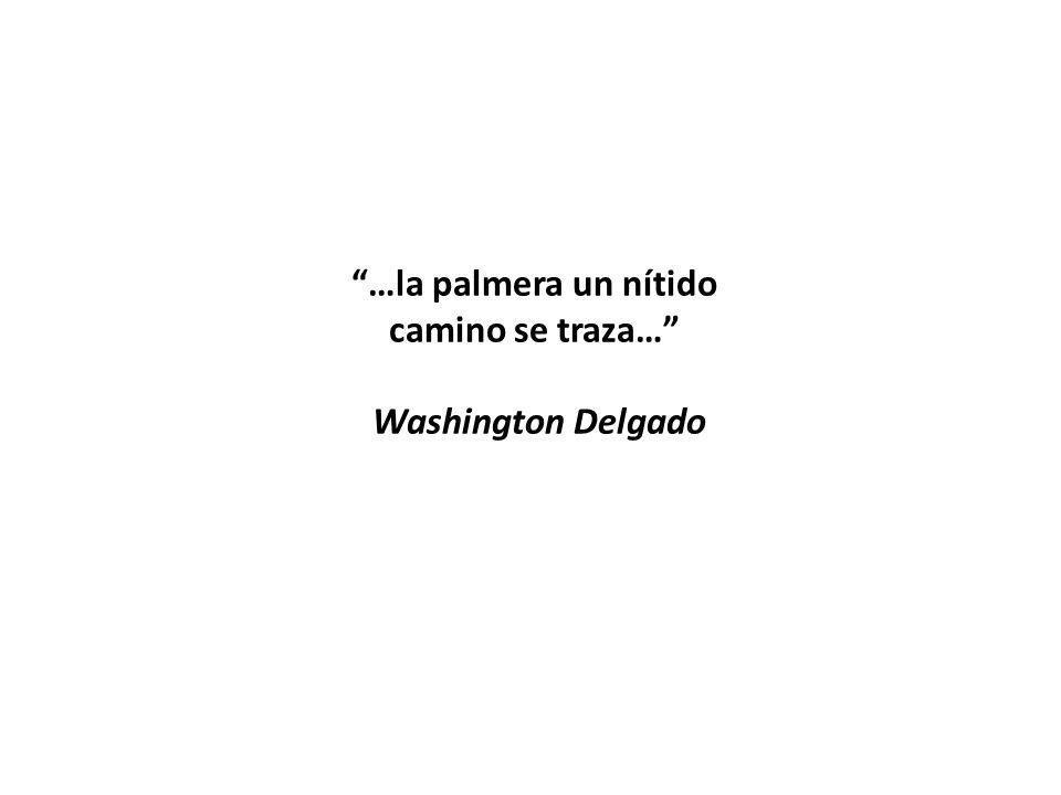 …la palmera un nítido camino se traza… Washington Delgado