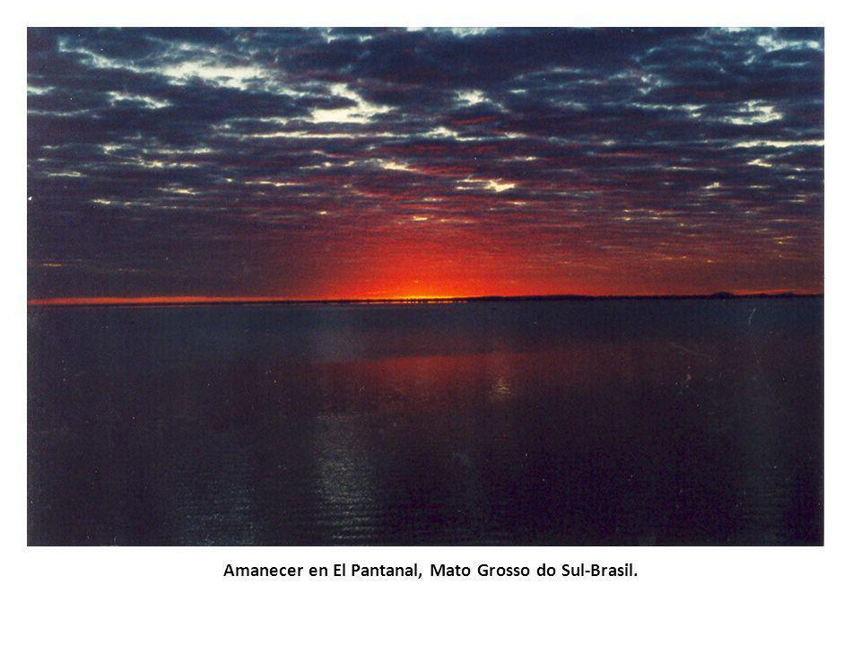 Amanecer en El Pantanal, Mato Grosso do Sul-Brasil.