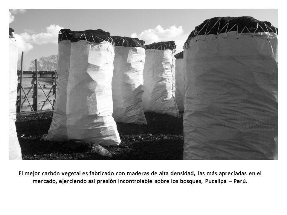 El mejor carbón vegetal es fabricado con maderas de alta densidad, las más apreciadas en el mercado, ejerciendo así presión incontrolable sobre los bosques, Pucallpa – Perú.