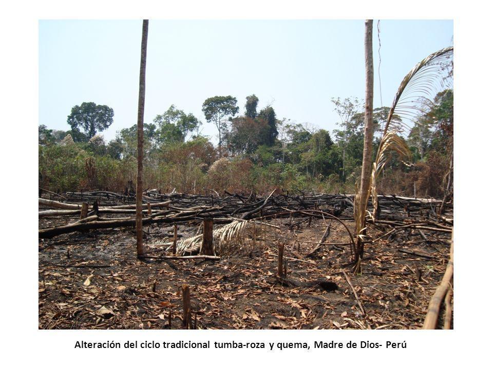 Alteración del ciclo tradicional tumba-roza y quema, Madre de Dios- Perú