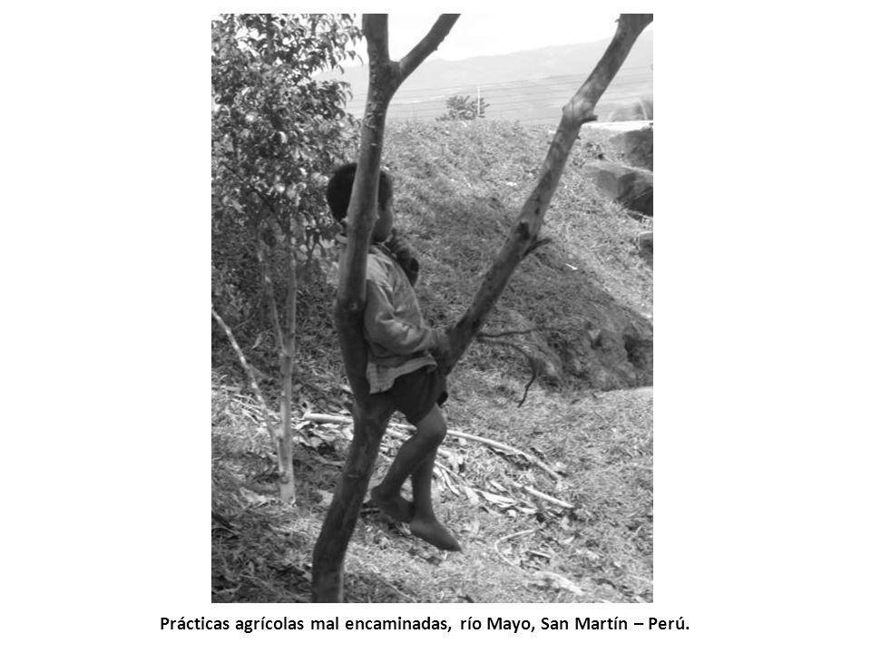 Prácticas agrícolas mal encaminadas, río Mayo, San Martín – Perú.