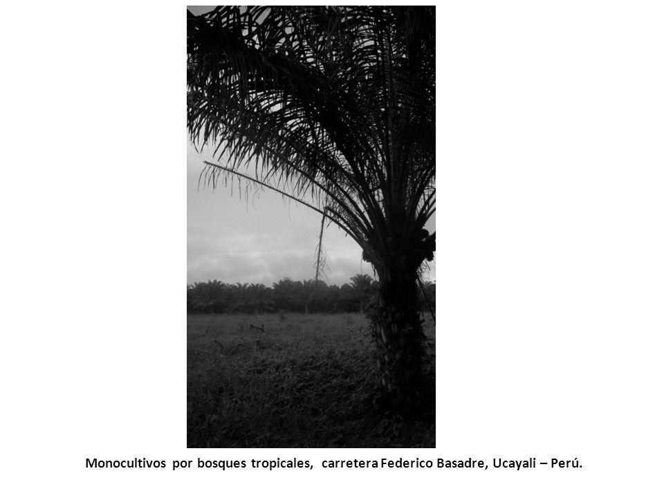 Monocultivos por bosques tropicales, carretera Federico Basadre, Ucayali – Perú.