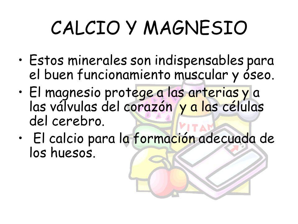 CALCIO Y MAGNESIO Estos minerales son indispensables para el buen funcionamiento muscular y óseo.