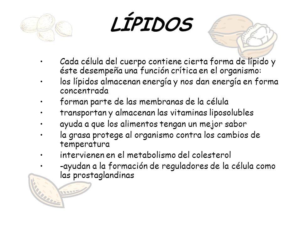 LÍPIDOS Cada célula del cuerpo contiene cierta forma de lípido y éste desempeña una función crítica en el organismo: