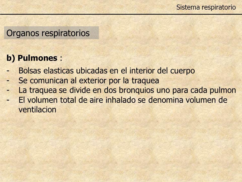 Organos respiratorios