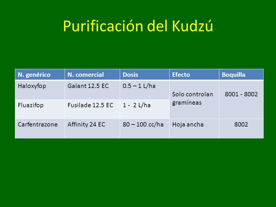 Purificación del Kudzú