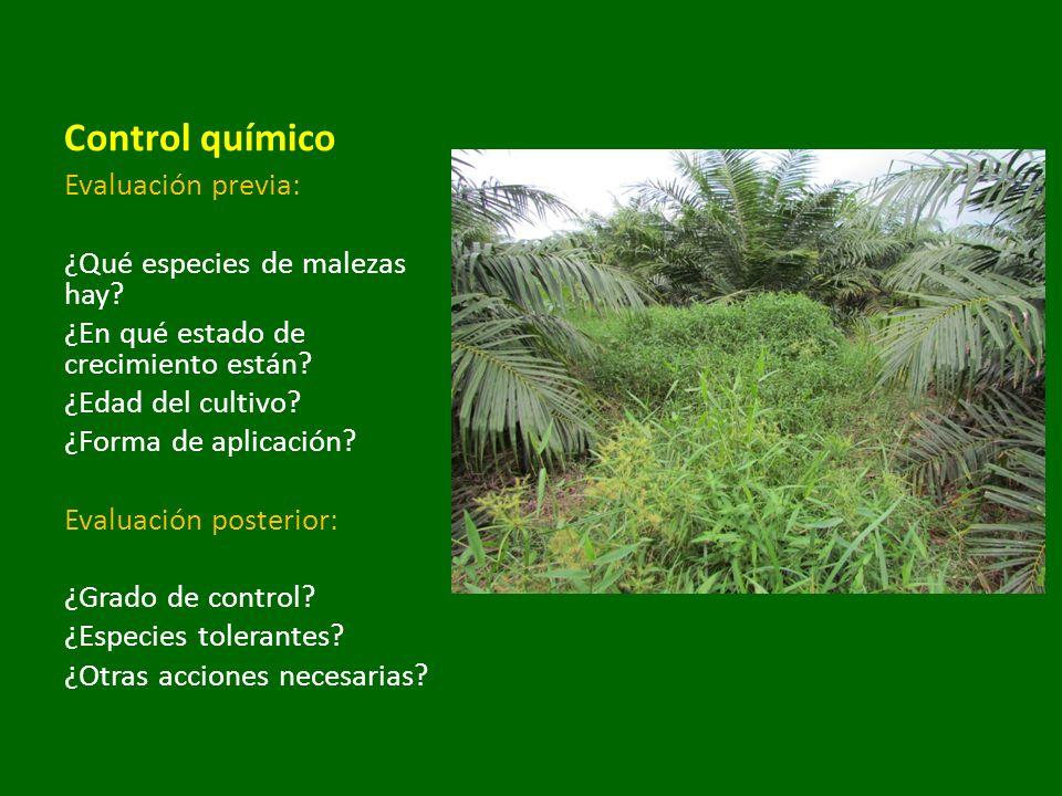 Control químico Evaluación previa: ¿Qué especies de malezas hay