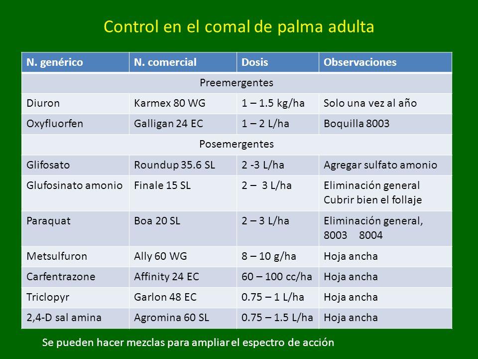 Control en el comal de palma adulta
