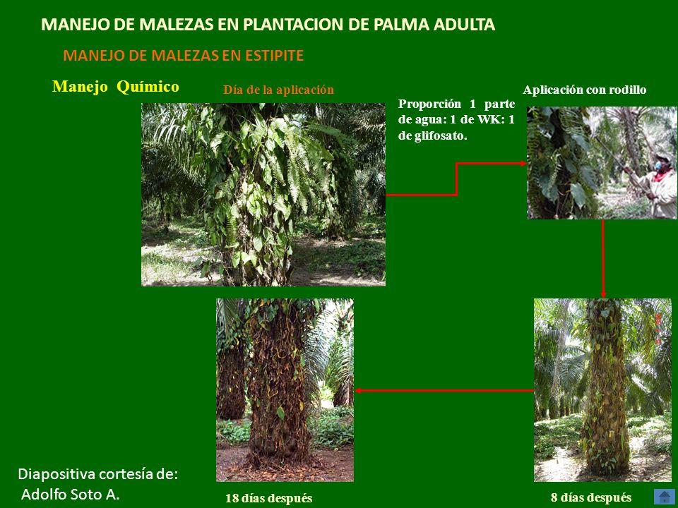 MANEJO DE MALEZAS EN PLANTACION DE PALMA ADULTA
