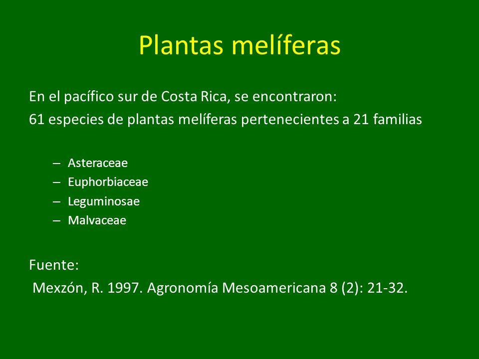 Plantas melíferas En el pacífico sur de Costa Rica, se encontraron: