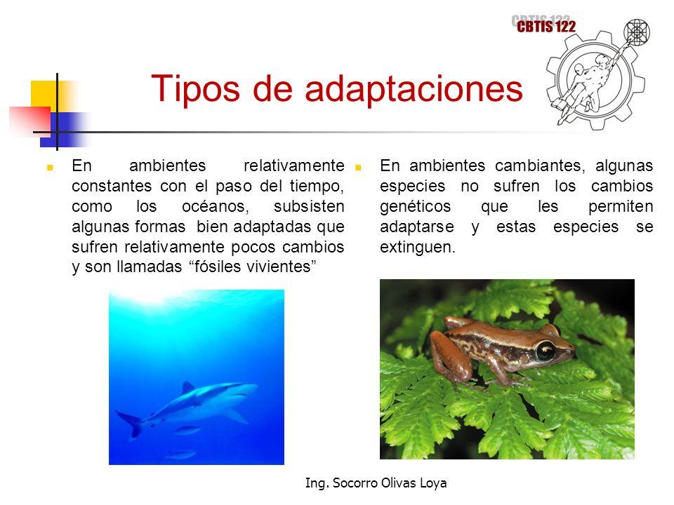 Ing. Socorro Olivas Loya