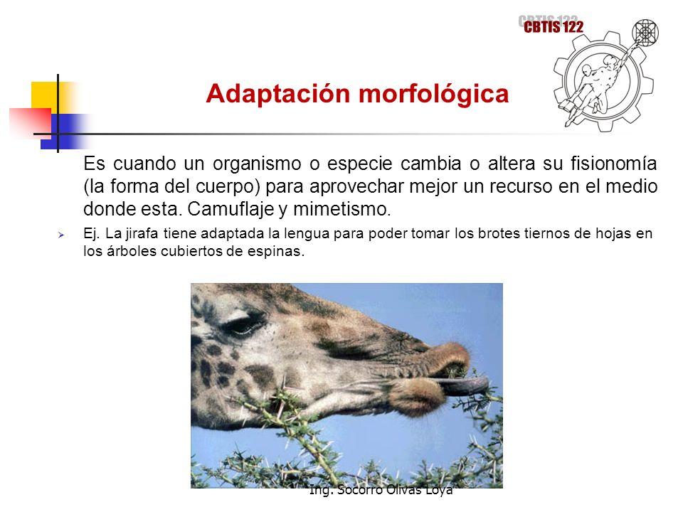 Adaptación morfológica