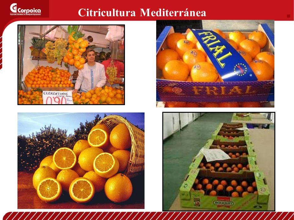 Citricultura Mediterránea