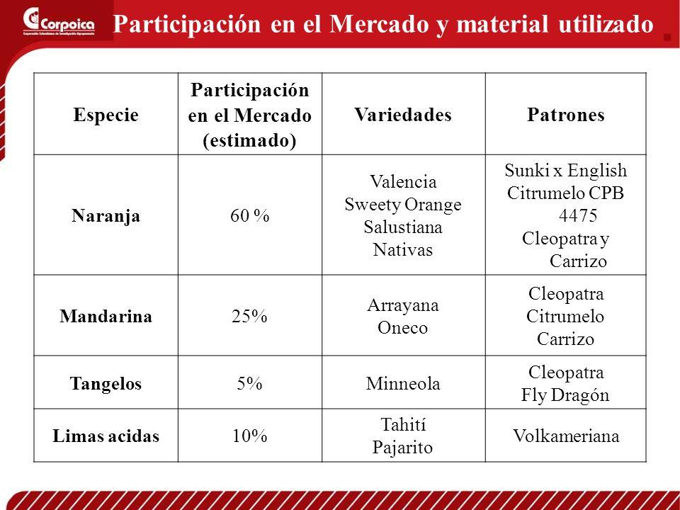 Participación en el Mercado y material utilizado