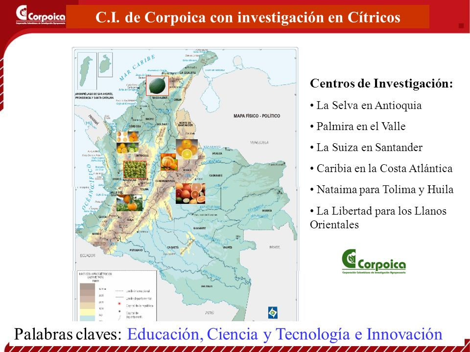 C.I. de Corpoica con investigación en Cítricos