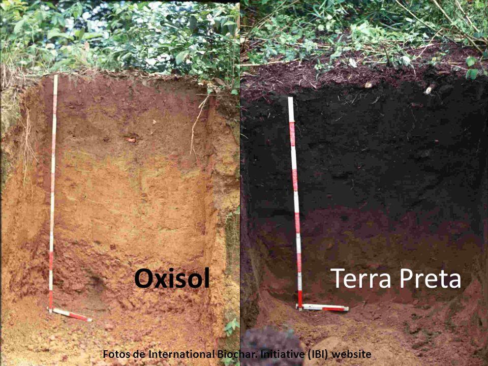 very dark, fertile anthropogenic soils found in the Amazon Basin