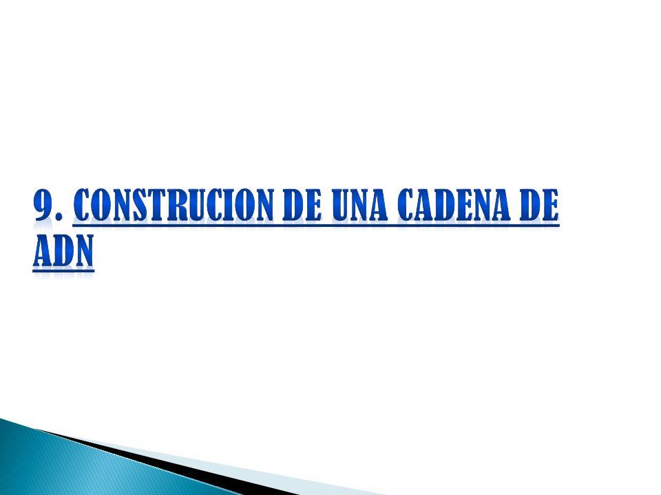 9. CONSTRUCION DE UNA CADENA DE ADN
