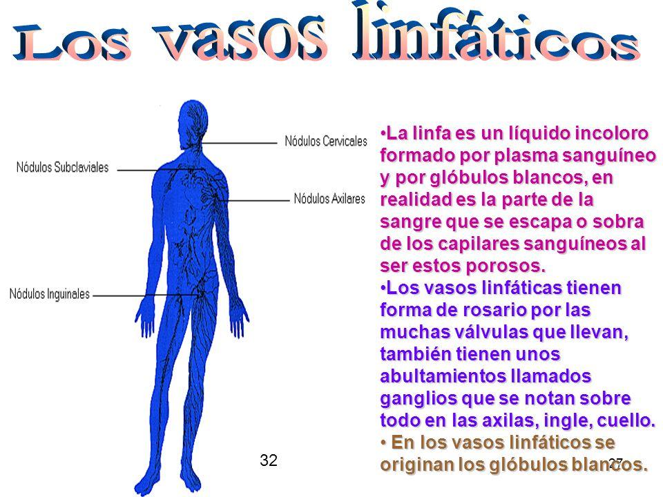 Los vasos linfáticos