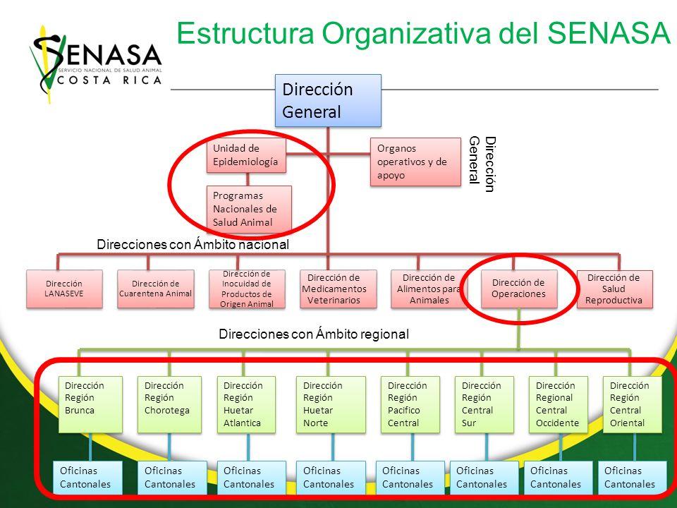 Estructura Organizativa del SENASA