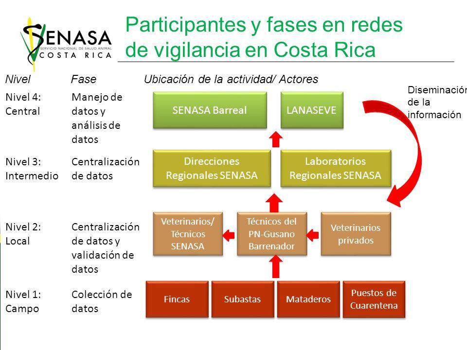 Participantes y fases en redes de vigilancia en Costa Rica
