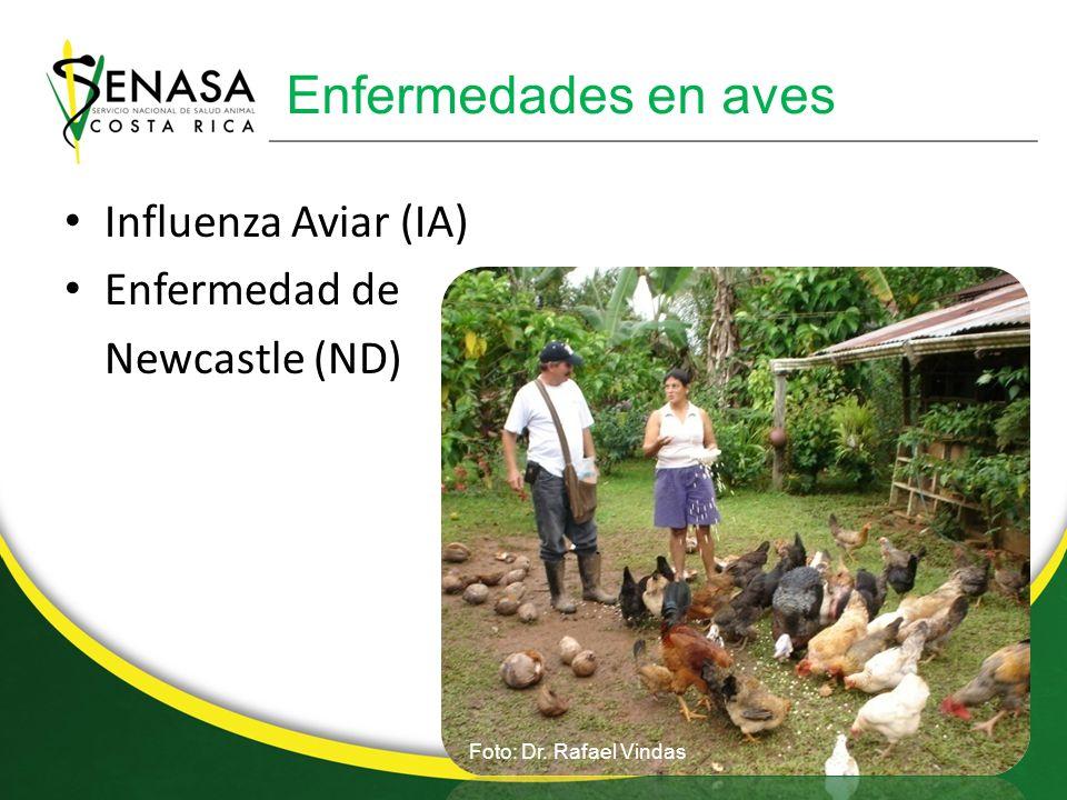 Enfermedades en aves Influenza Aviar (IA) Enfermedad de Newcastle (ND)