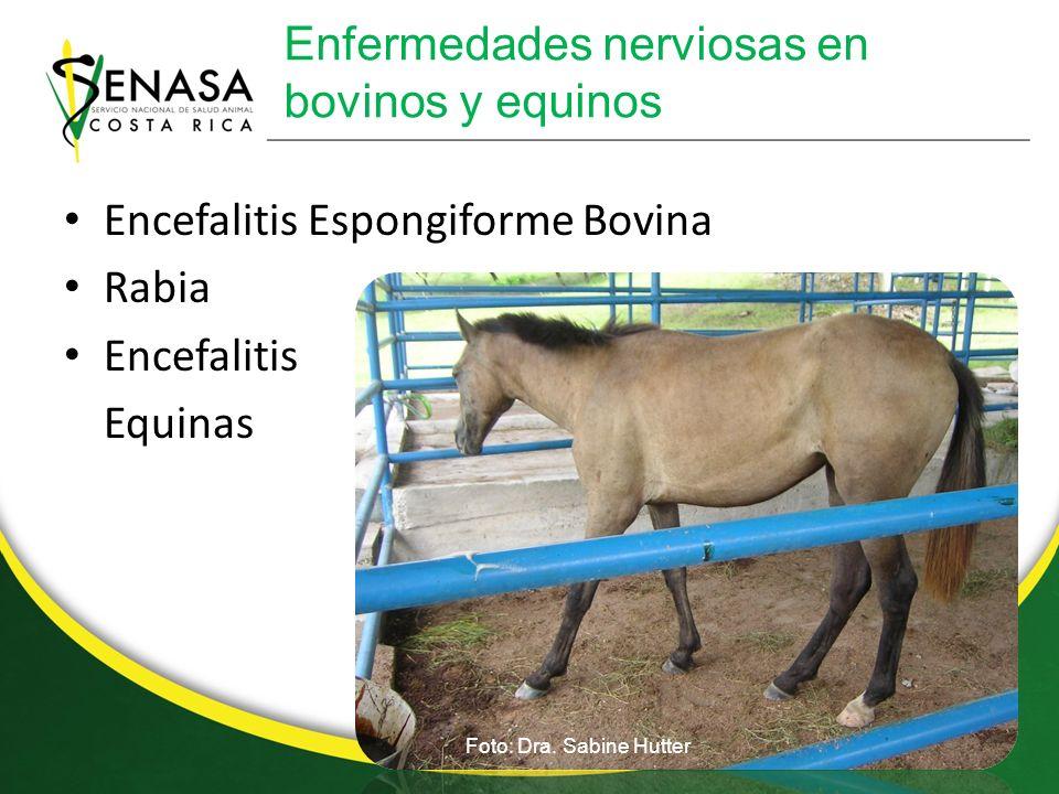 Enfermedades nerviosas en bovinos y equinos