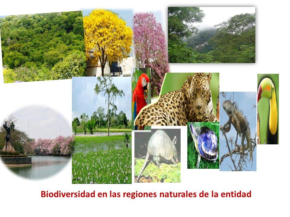 Biodiversidad en las regiones naturales de la entidad