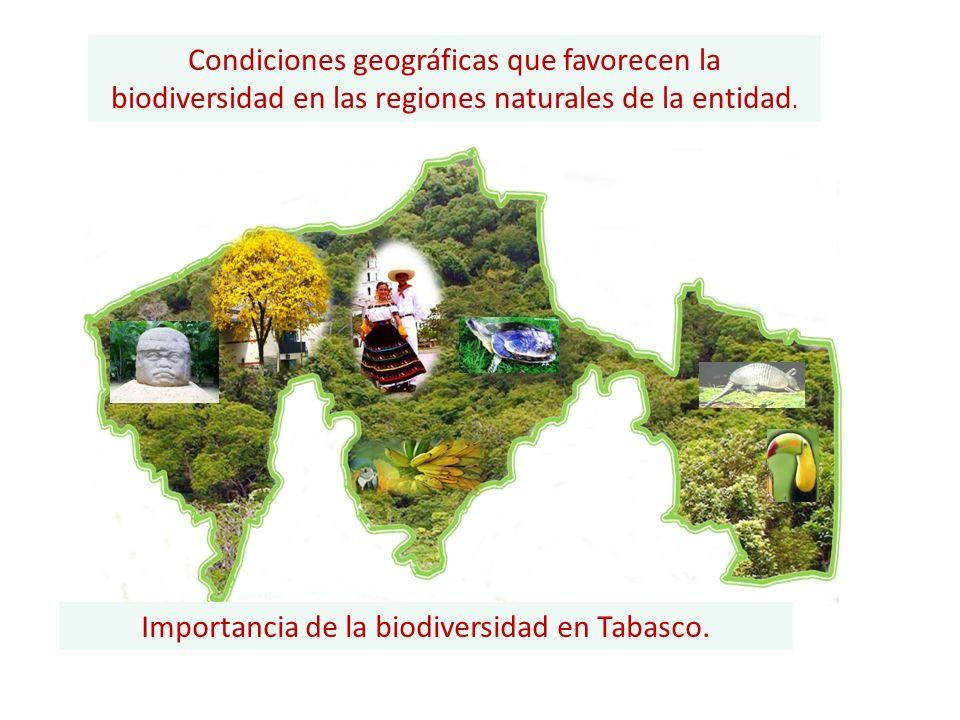 Importancia de la biodiversidad en Tabasco.