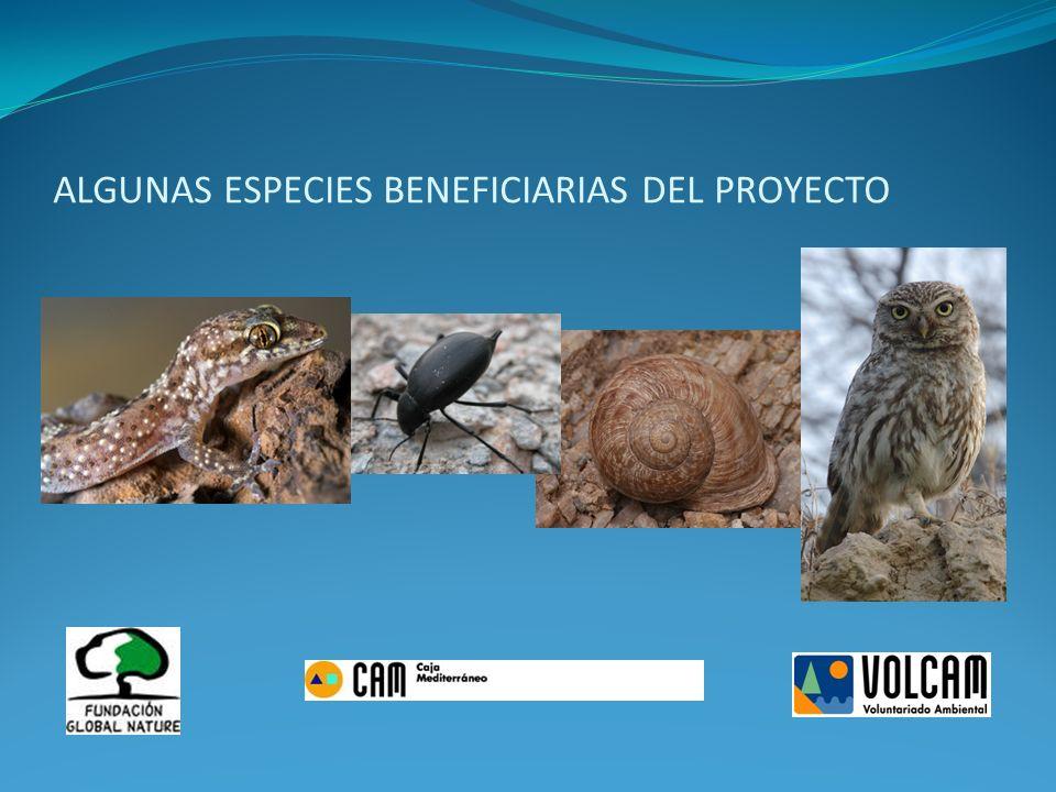 ALGUNAS ESPECIES BENEFICIARIAS DEL PROYECTO