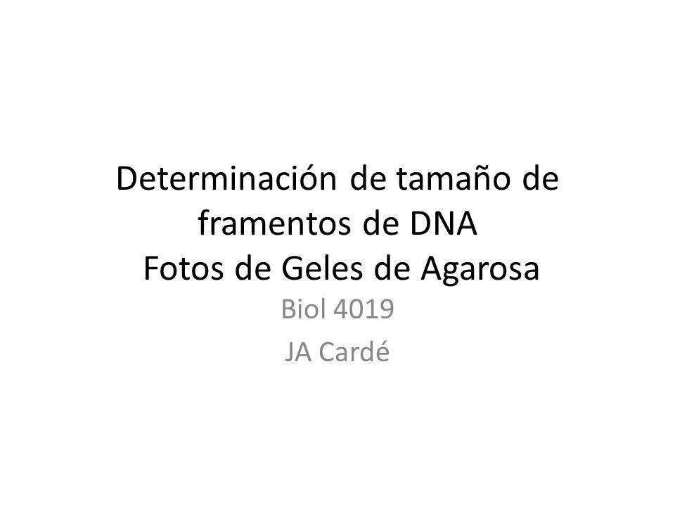 Determinación de tamaño de framentos de DNA Fotos de Geles de Agarosa