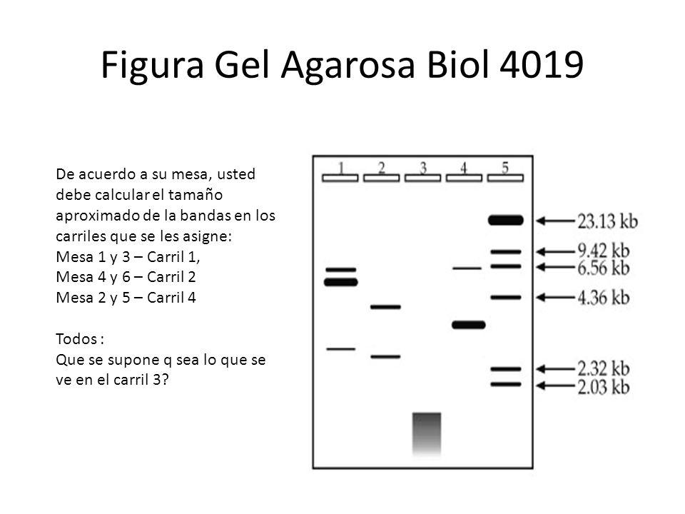 Figura Gel Agarosa Biol 4019