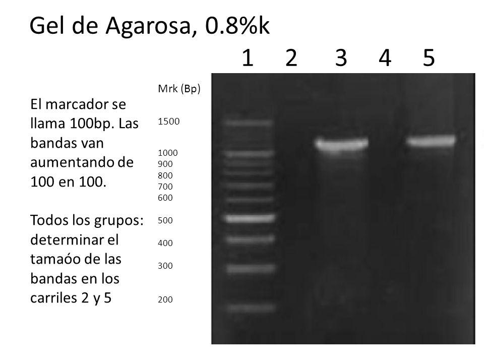 Gel de Agarosa, 0.8%k 1 2 3 4 5 Mrk (Bp) 1500.