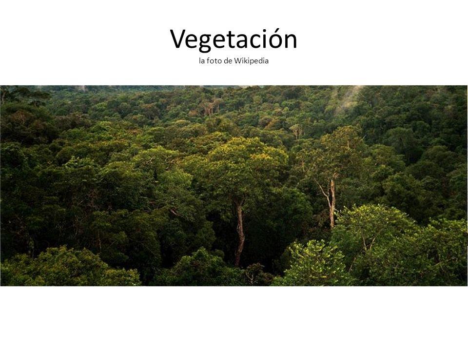 Vegetación la foto de Wikipedia
