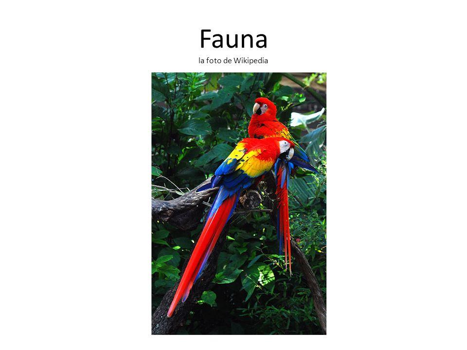 Fauna la foto de Wikipedia