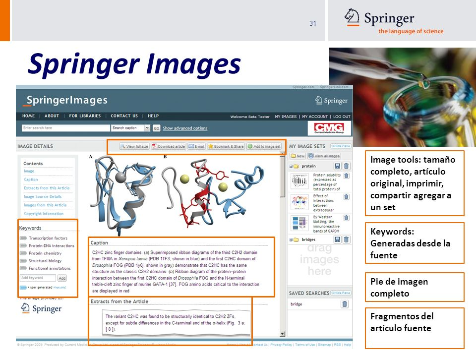 Springer Images Image tools: tamaño completo, artículo original, imprimir, compartir agregar a un set.