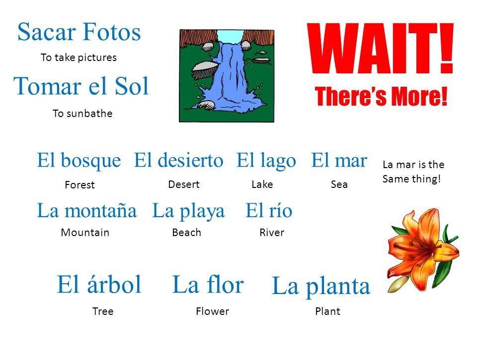 WAIT! Sacar Fotos Tomar el Sol El árbol La flor La planta