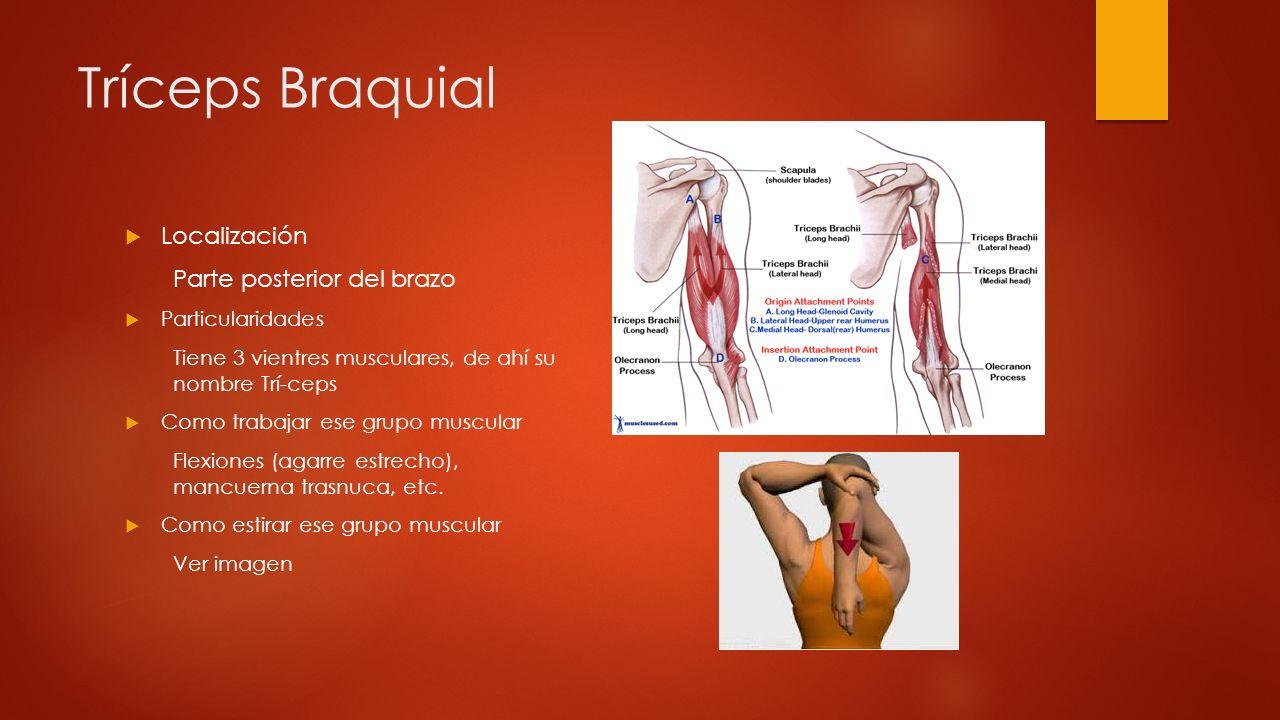 Tríceps Braquial Localización Parte posterior del brazo