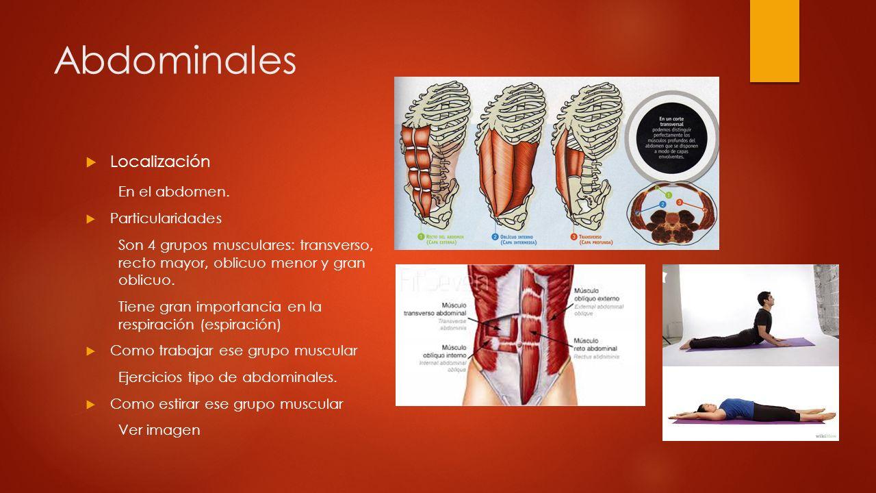Abdominales Localización En el abdomen. Particularidades