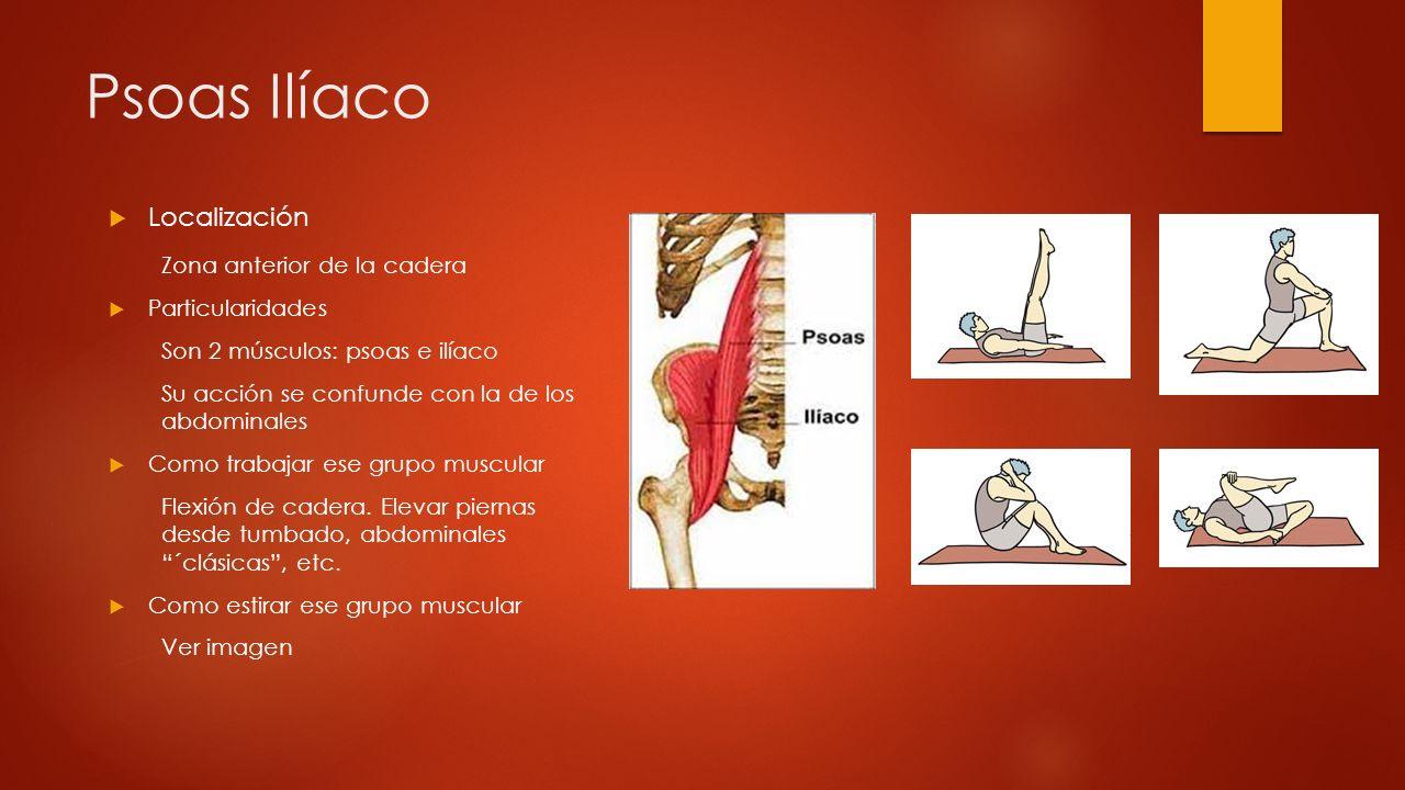 Psoas Ilíaco Localización Zona anterior de la cadera Particularidades