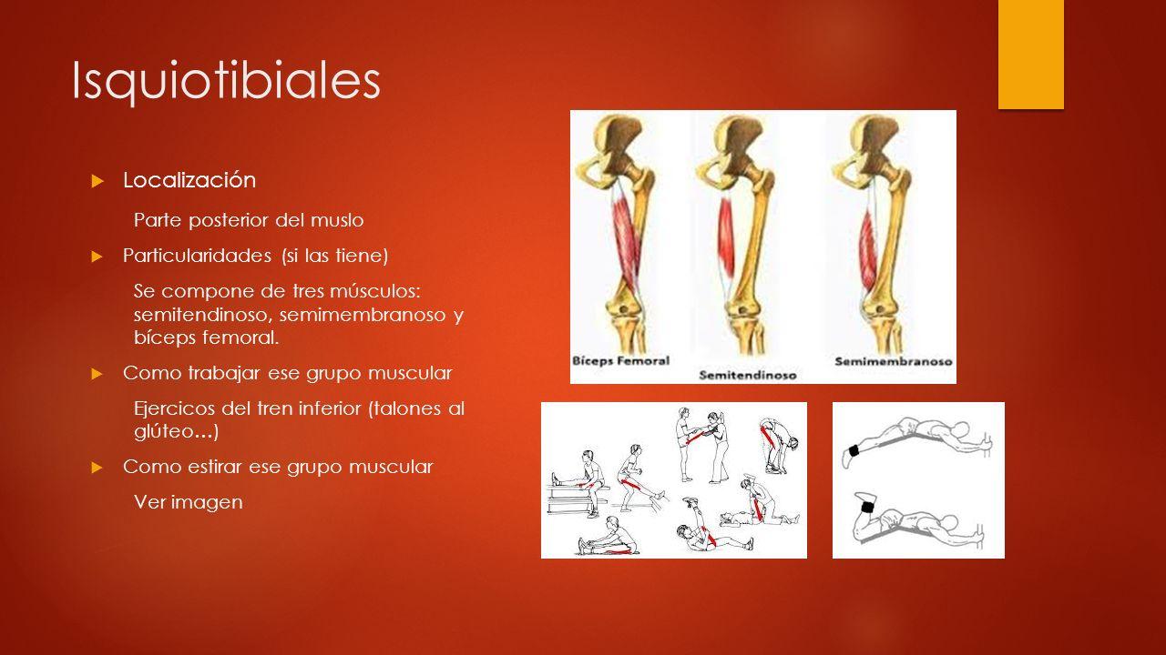 Isquiotibiales Localización Parte posterior del muslo
