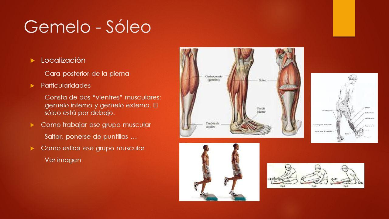 Gemelo - Sóleo Localización Cara posterior de la pierna
