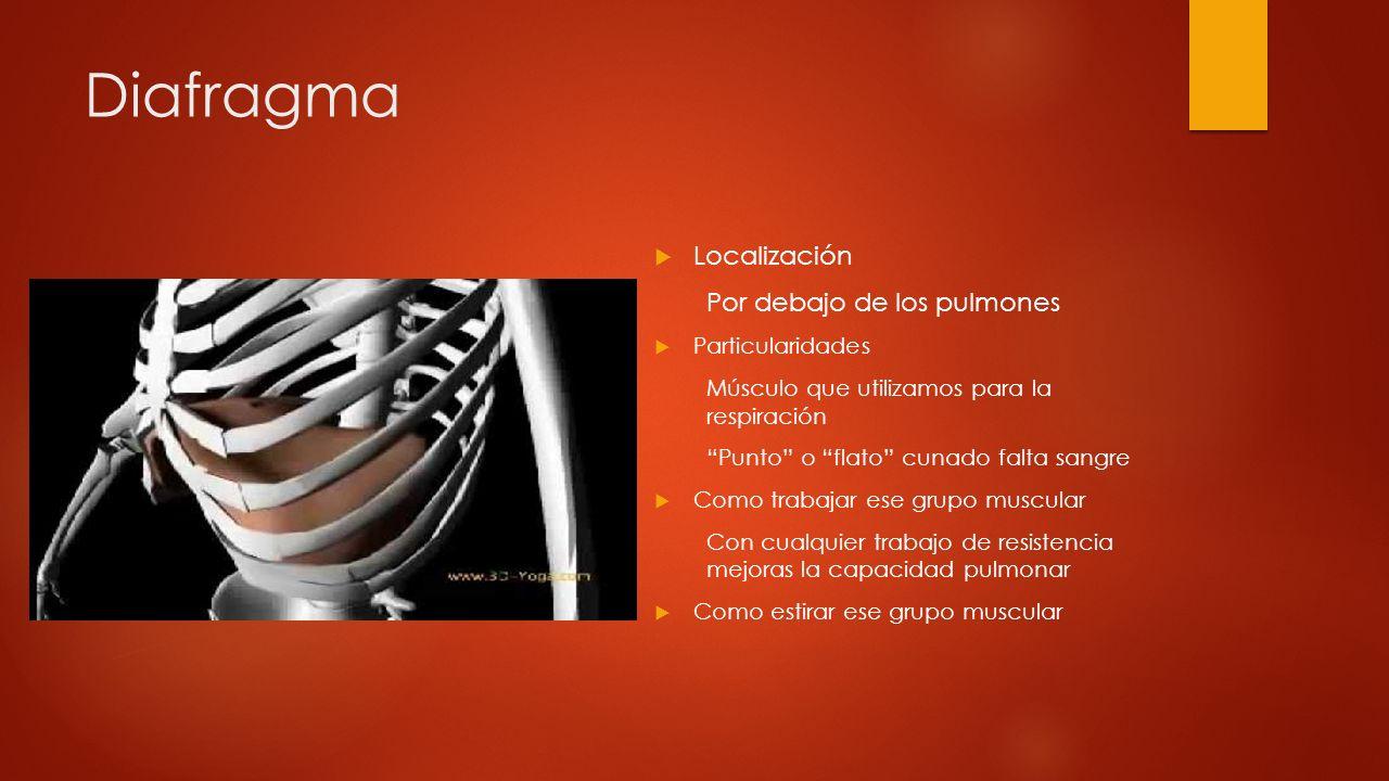 Diafragma Localización Por debajo de los pulmones Particularidades