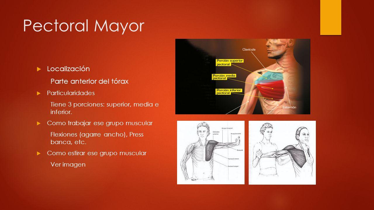 Pectoral Mayor Localización Parte anterior del tórax Particularidades