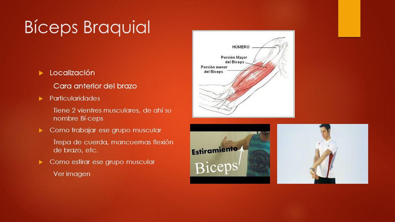 Bíceps Braquial Localización Cara anterior del brazo Particularidades
