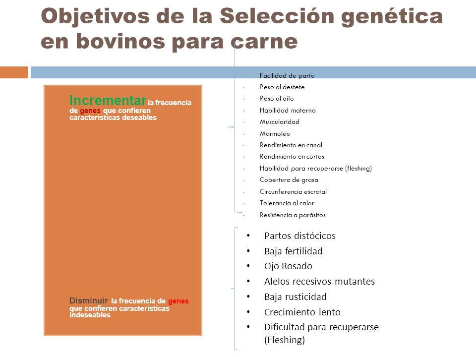 Objetivos de la Selección genética en bovinos para carne