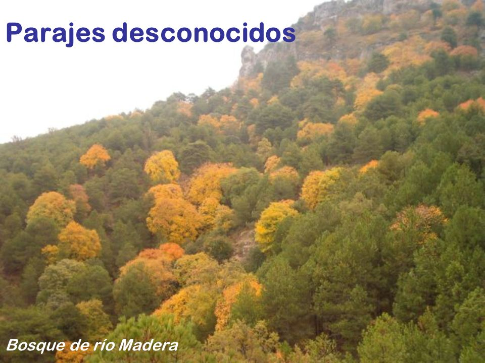 Parajes desconocidos Bosque de río Madera
