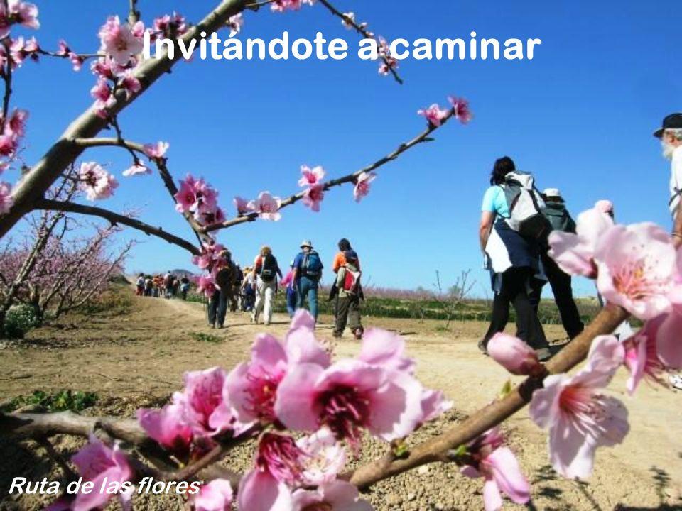 Invitándote a caminar Ruta de las flores