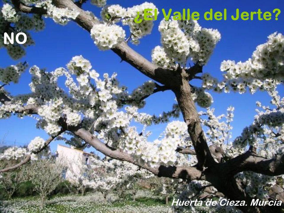¿El Valle del Jerte NO Huerta de Cieza. Murcia