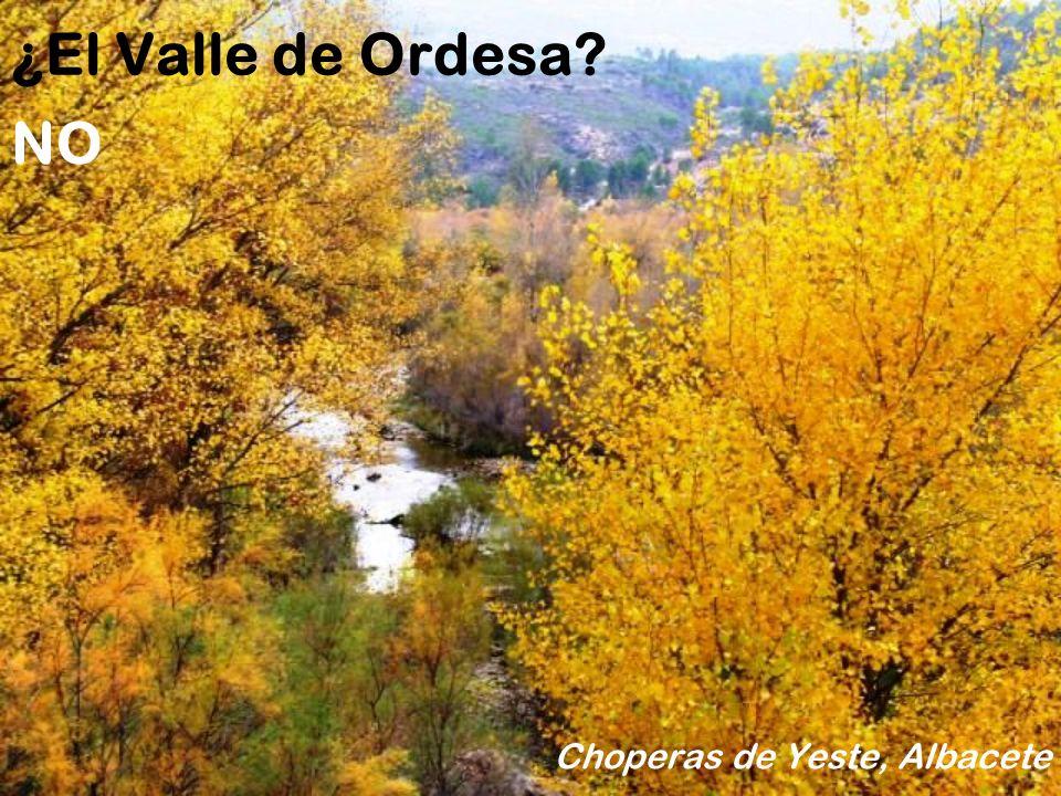 Choperas de Yeste, Albacete